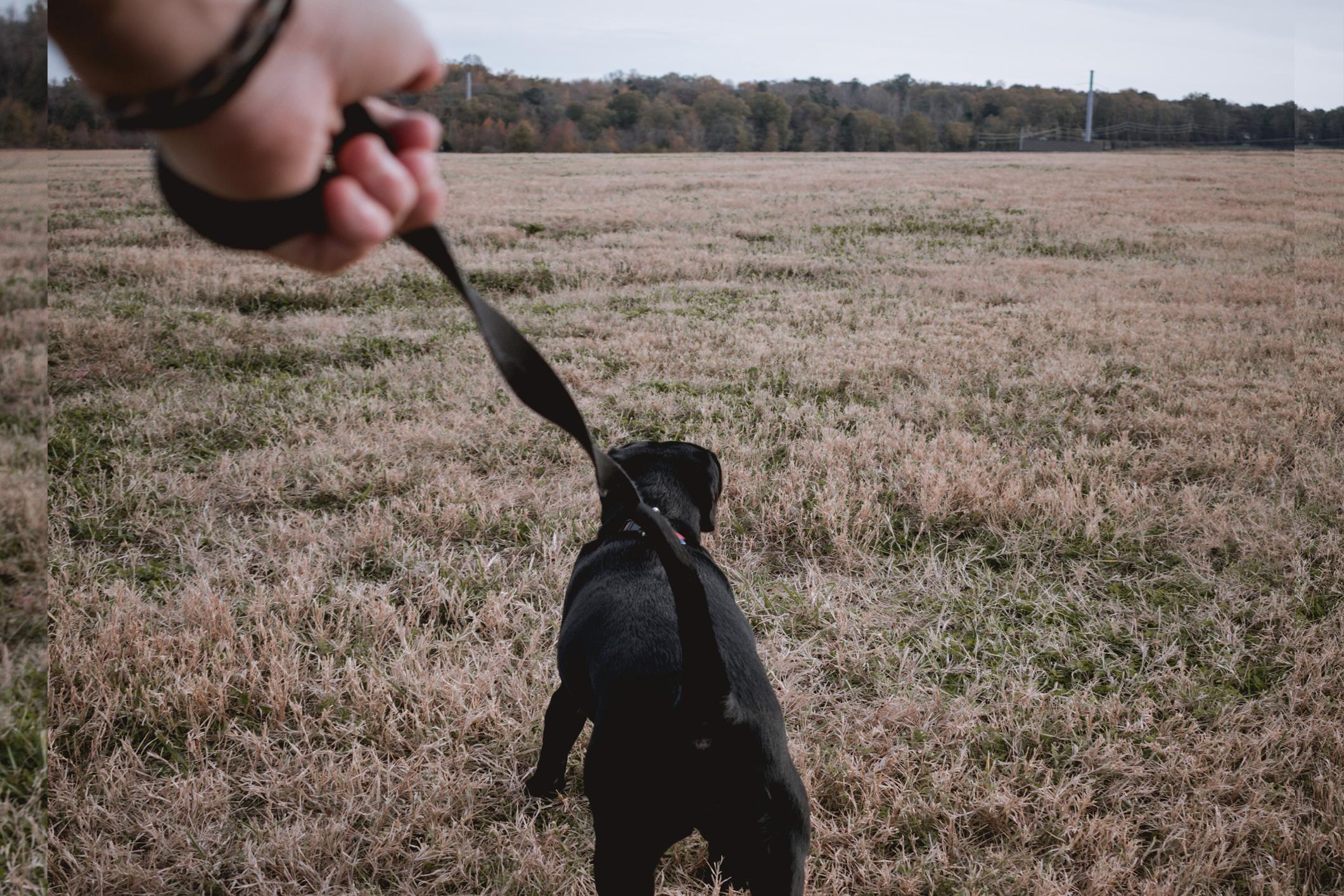 The Dog Owner's Risk Appetite