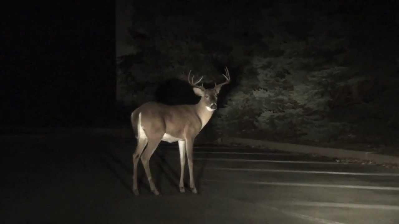Caught like a deer in headlights